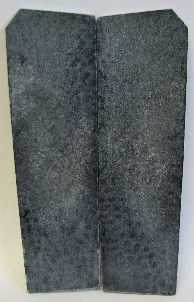 FOSSIL CORAL SCALES 4-3/8 x 1-1/4 to 1-3/8 x 1/8