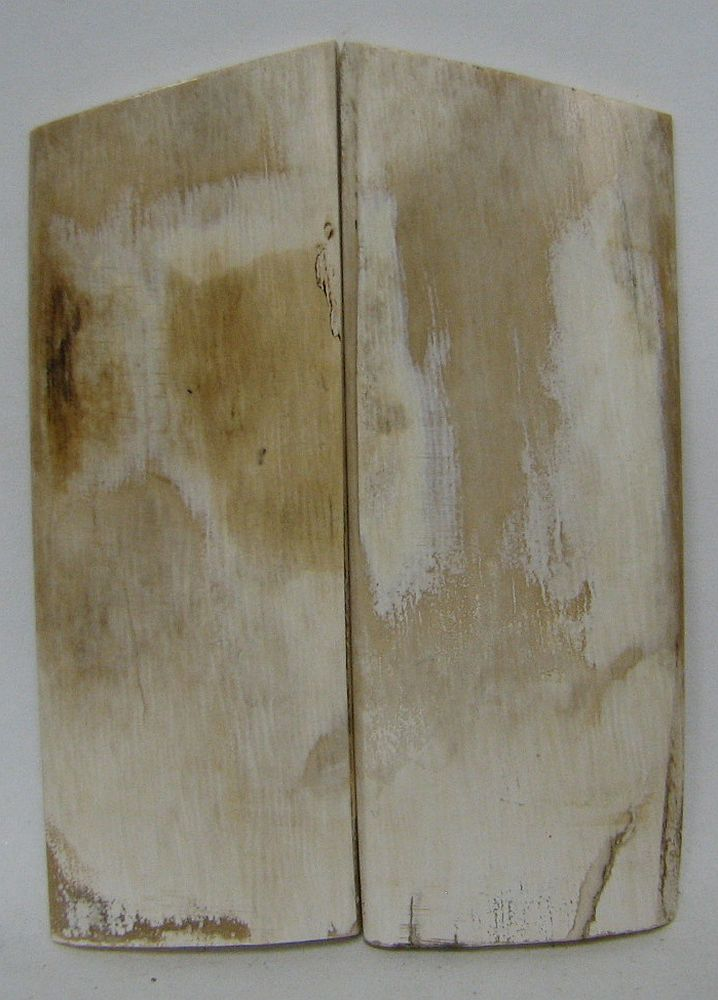 MAMMOTH IVORY SCALES 2-7/8 x 1-1/16 x 1/8