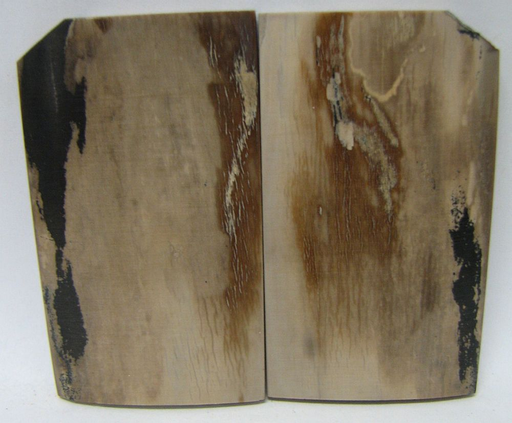 MAMMOTH IVORY SCALES 2-1/4 x 1-1/4 to 1-5/16 x 3/16