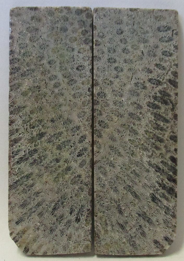 FOSSIL CORAL SCALES 3-5/16 x 1-1/8 x 1/8