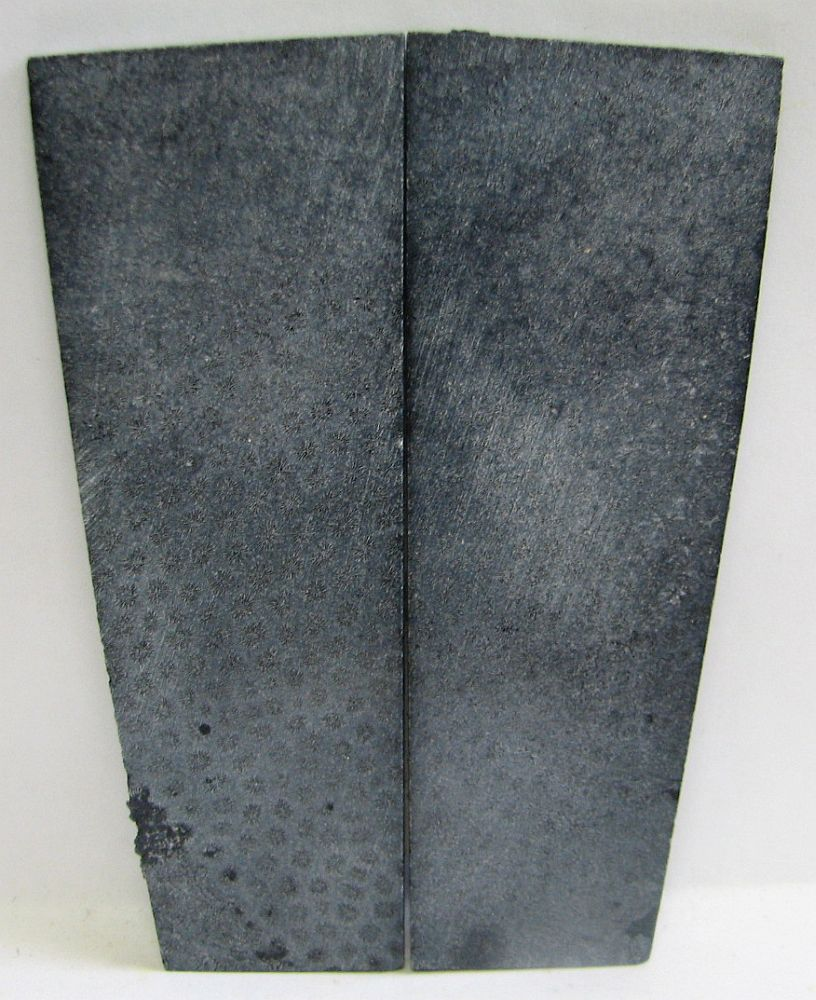 FOSSIL CORAL SCALES 4-7/16 x 1-5/16 to 1-9/16 x 1/8