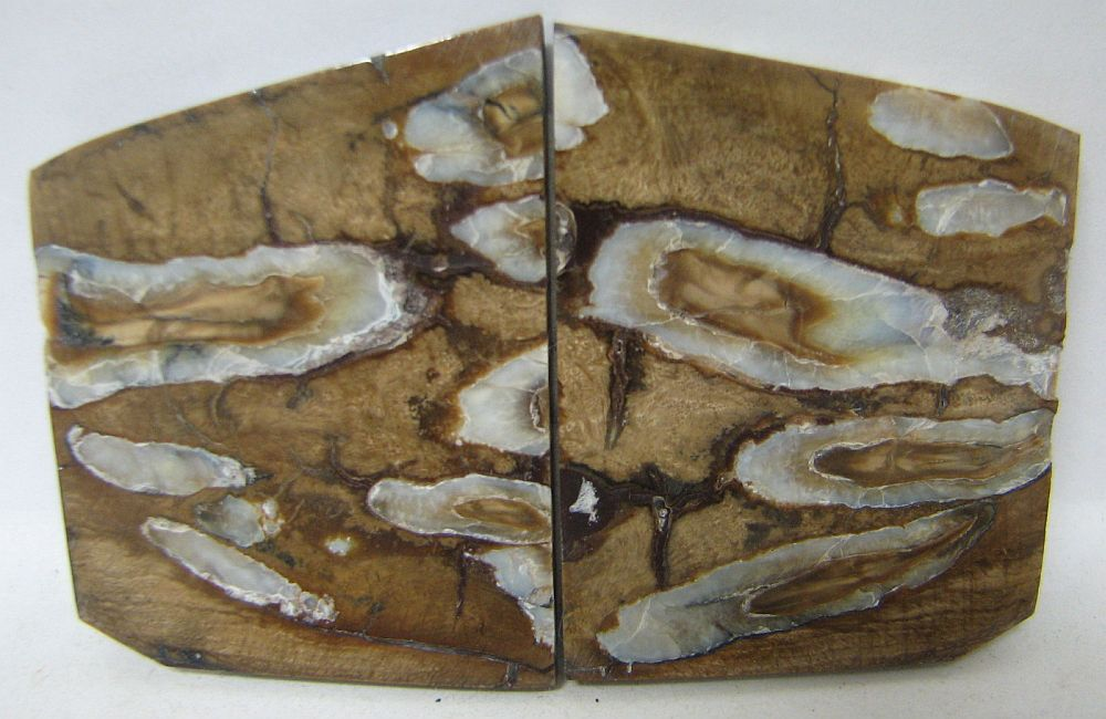 MAMMOTH TOOTH SCALES 1-5/8 x 1-7/16 x 1/8