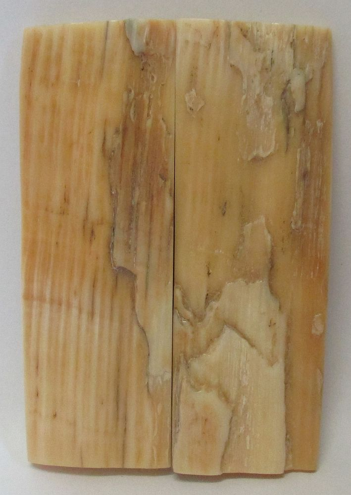 MAMMOTH IVORY SCALES 2-11/16 x 7/8 to 15/16 x 5/32