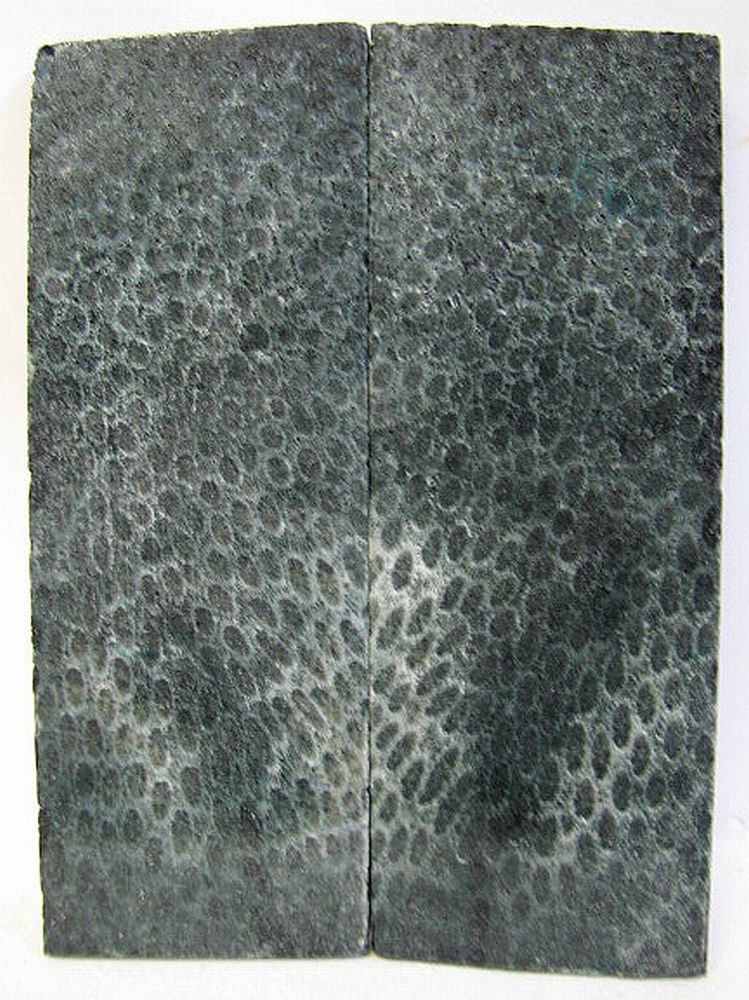 FOSSIL CORAL SCALES 4-11/16 to 4-3/4 x 1-11/16 to 1-3/4 x 3/16