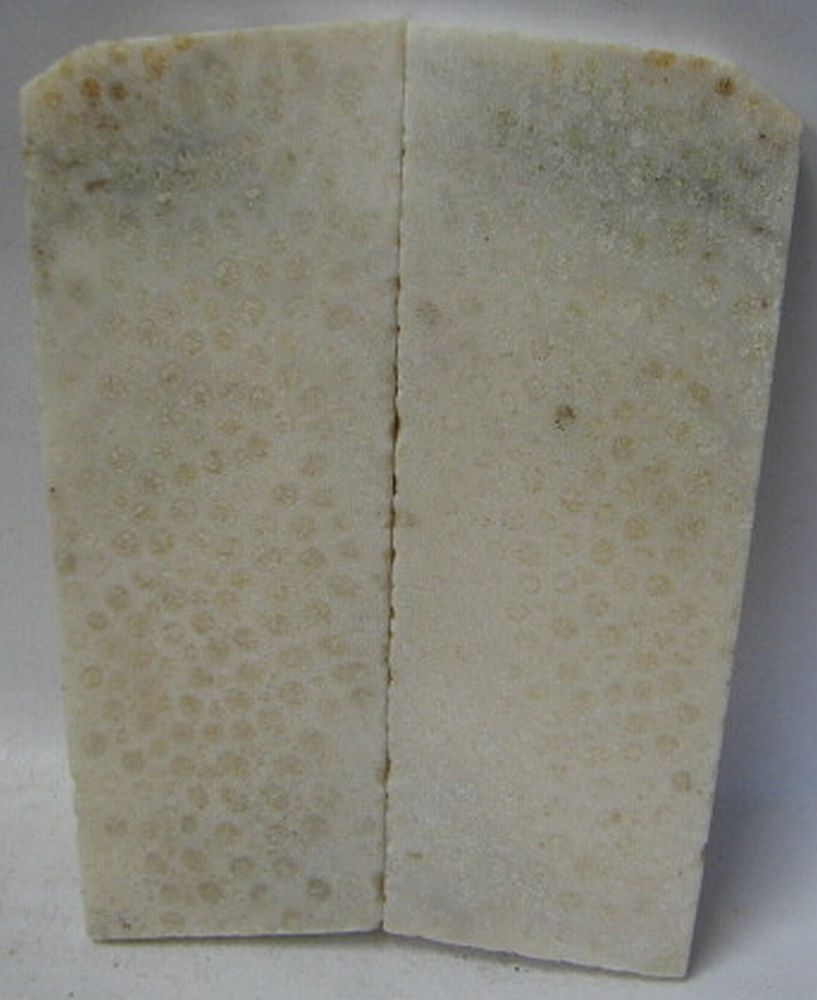 FOSSIL CORAL SCALES 3-7/8 x 1-3/8 to 1-5/8 x 1/8 to 3/16