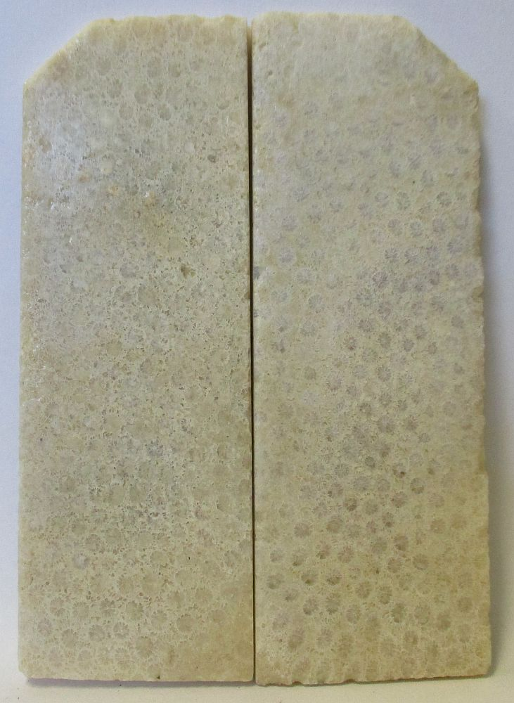 FOSSIL CORAL SCALES 3-5/8 to 4 x 1-3/8 to 1-7/16 x 5/32