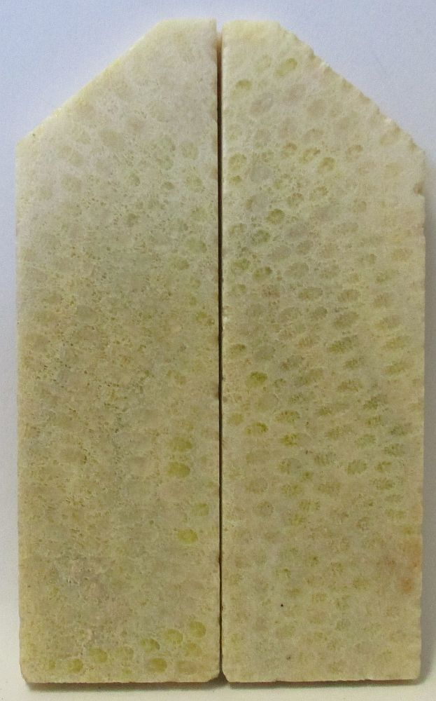 FOSSIL CORAL SCALES 3-3/8 to 4-1/8 x 1-1/4 x 7/32