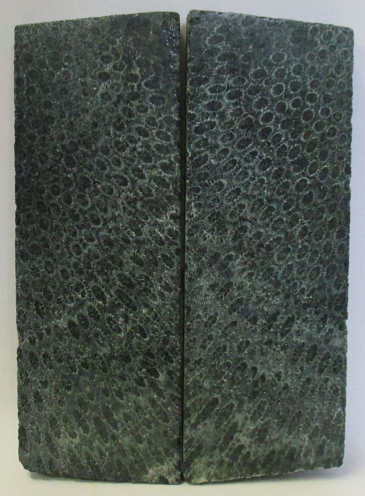 FOSSIL CORAL SCALES 4-3/16 to 4-5/16 x 1-1/2 x 1/4