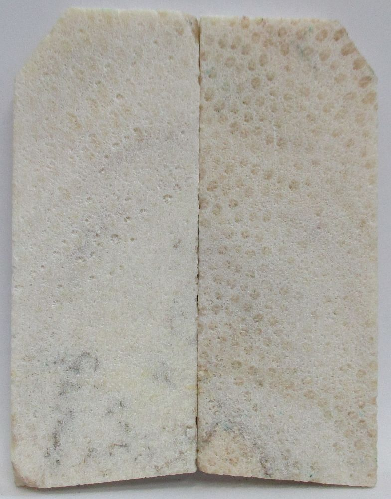 FOSSIL CORAL SCALES 3-5/8 to 3-15/16 x 1-1/4 to 1-9/16 x 5/16