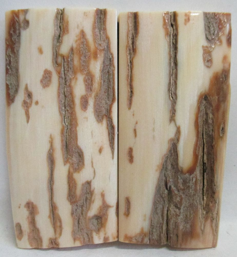 MAMMOTH IVORY SCALES 2-1/8 to 2-3/16 x 15/16 to 1 x 3/16
