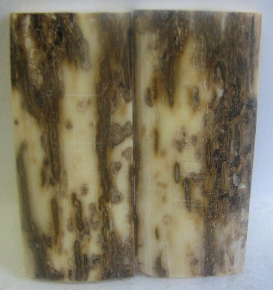 MAMMOTH IVORY SCALES 2-1/8 x 7/8 to 15/16 x 3/16