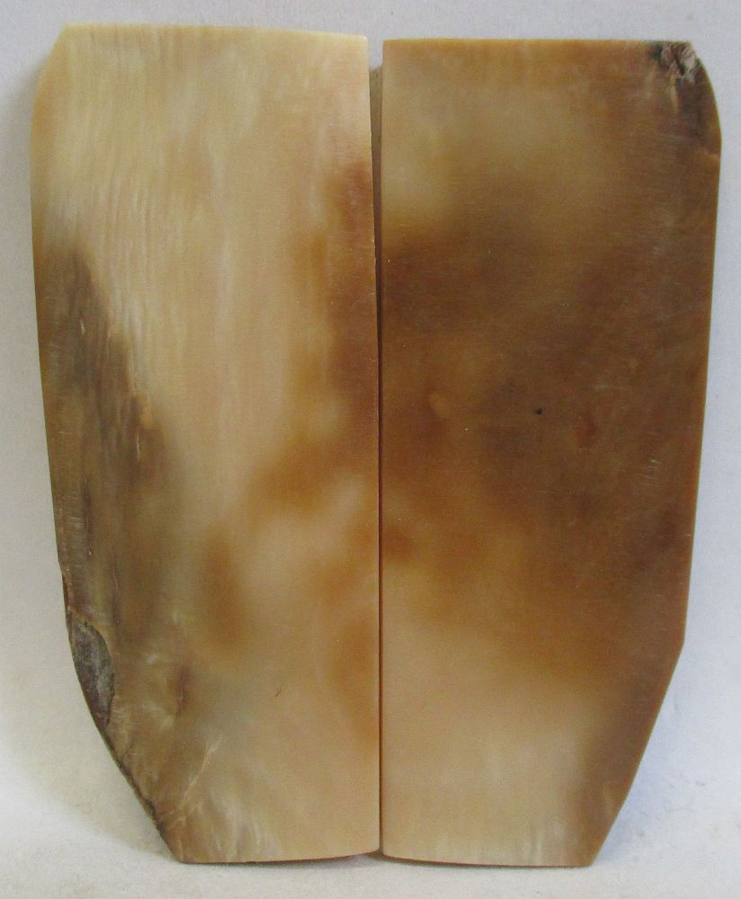 MAMMOTH IVORY SCALES 2-3/8 x 9/16 to 1 x 1/8 to 5/32