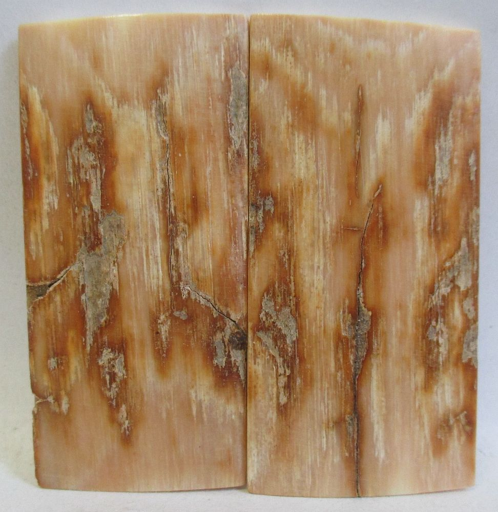 MAMMOTH IVORY SCALES 2-1/4 x 1-1/16 x 1/16