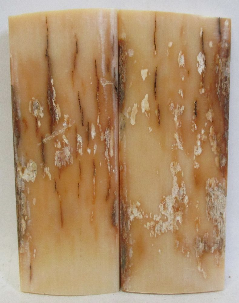 MAMMOTH IVORY SCALES 2-9/16 to 2-5/8 x 1 x 3/16