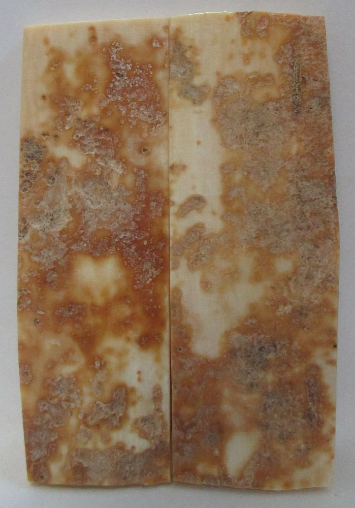 MAMMOTH IVORY SCALES 2-5/8 x 13/16 to 7/8 x 5/32