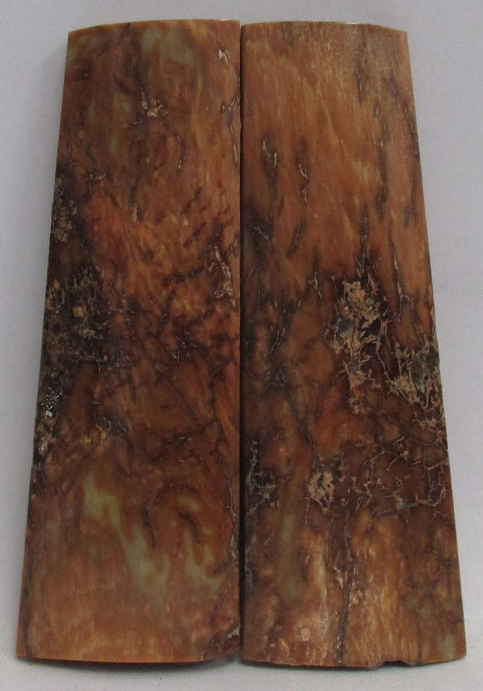 MAMMOTH IVORY SCALES 2-11/16 x 3/4 to 7/8 x 3/16