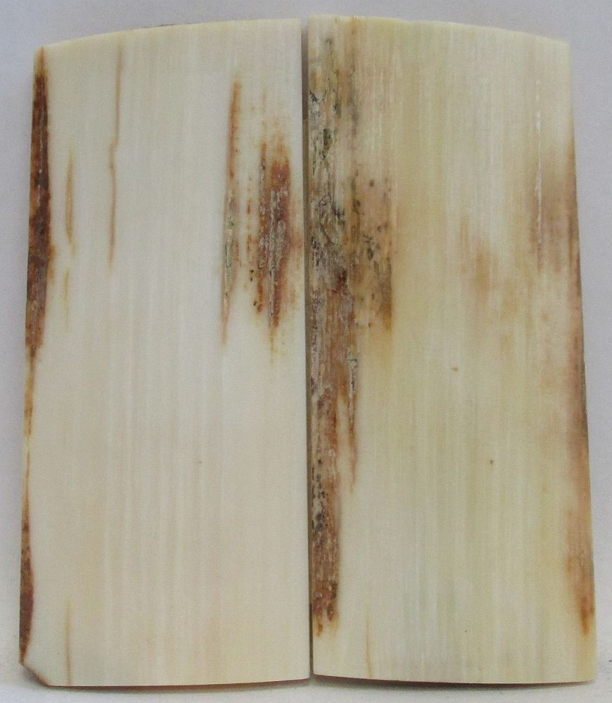 MAMMOTH IVORY SCALES 2-5/8 x 1-1/16 to 1-1/8 x 1/8