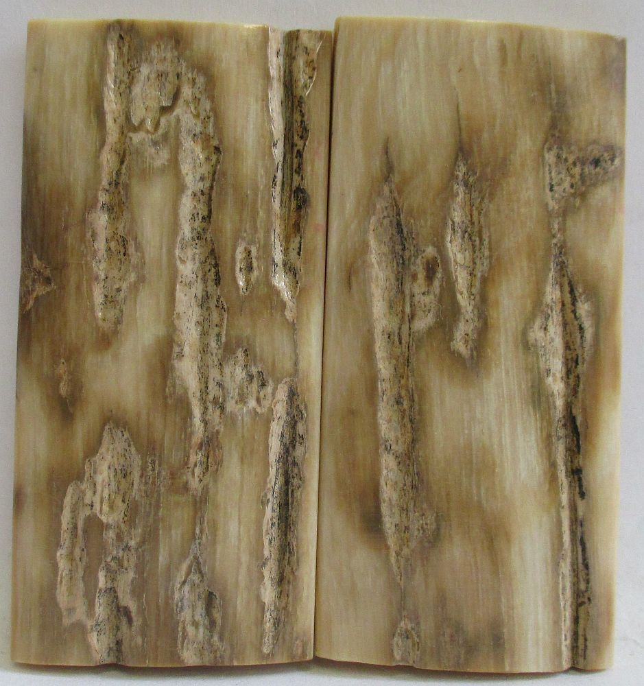 MAMMOTH IVORY SCALES 2-1/4 x 1 to 1-1/16 x 3/16