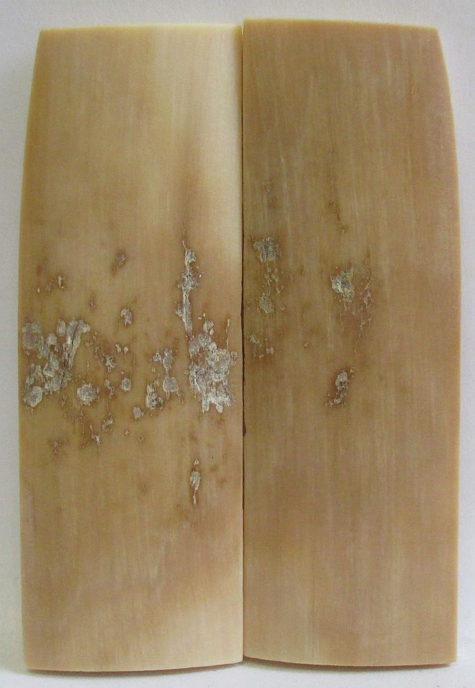 MAMMOTH IVORY SCALES 2-5/8 x 3/4 to 7/8 x 5/32