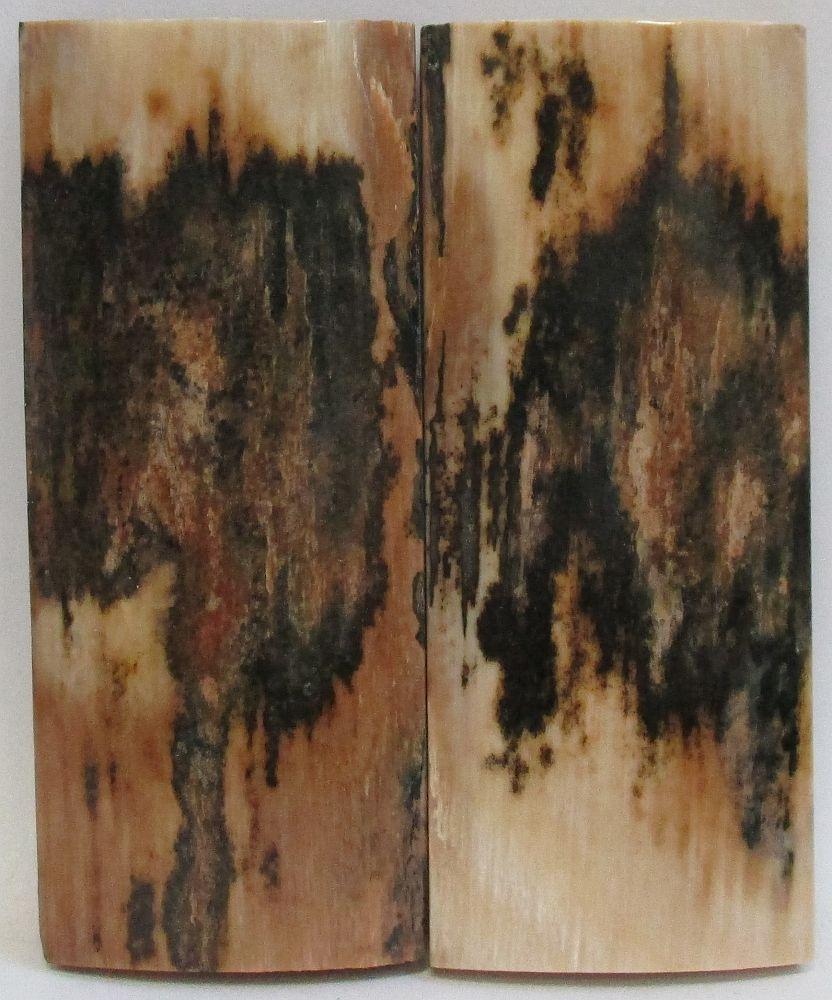 MAMMOTH IVORY SCALES 2-7/16 x 1 x 5/32