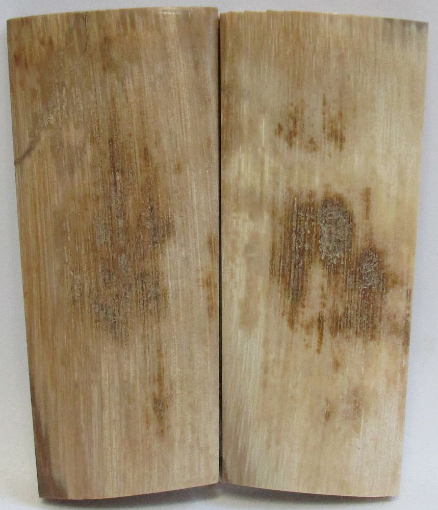 MAMMOTH IVORY SCALES 2-5/8 x 1 to 1-1/8 x 3/16