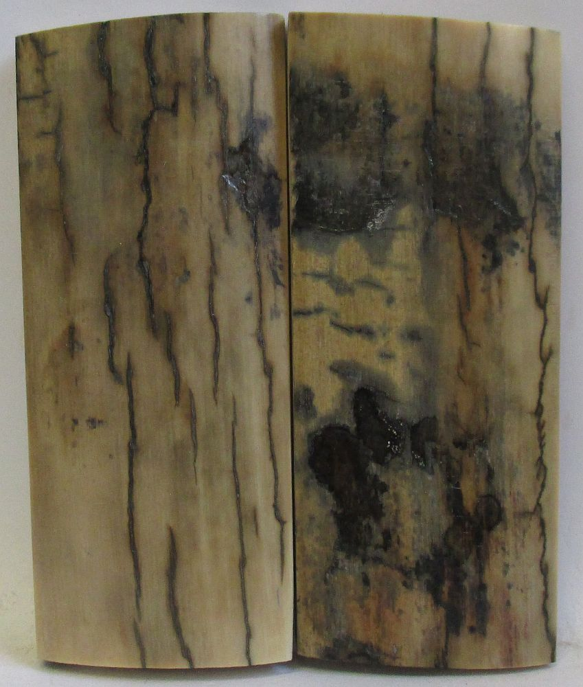 MAMMOTH IVORY SCALES 2-5/8 x 1-1/8 to 1-3/16 x 1/4