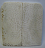 FOSSIL CORAL SCALES 3-11/16 x 1-3/4 x 3/16
