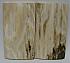 MAMMOTH IVORY SCALES 2-9/16 x 1-3/8 x 1/8