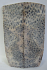 FOSSIL CORAL SCALES 4-5/16 x 1-1/16 to 1-5/16 x 1/8