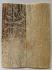 MAMMOTH IVORY SCALES 2-7/8 x 1-1/8 x 3/16