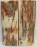 MAMMOTH IVORY SCALES 2-5/16 x 7/8 x 1/8