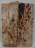 MAMMOTH IVORY SCALES 2-3/16 to 2-1/4 x 15/16 to 1 x 1/8