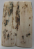 MAMMOTH IVORY SCALES 2-3/8 x 3/4 to 13/16 x 5/32