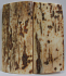 MAMMOTH IVORY SCALES 2-5/8 to 2-3/4 x 1-3/16 x 1/4