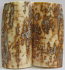 MAMMOTH IVORY SCALES 2-5/8 x 1-1/4 to 1-5/16 x 1/4 to 5/16