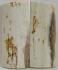 MAMMOTH IVORY SCALES 2-5/8 x 1-1/8 x 5/32